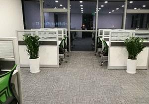 保健植物改善室�瓤�赓|量