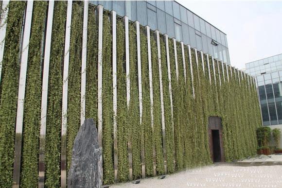 西溪室外墙体绿化