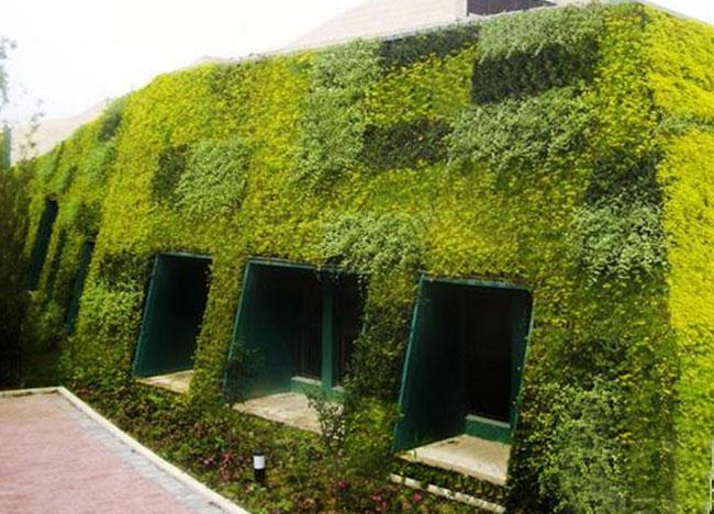 幼儿园墙体绿化