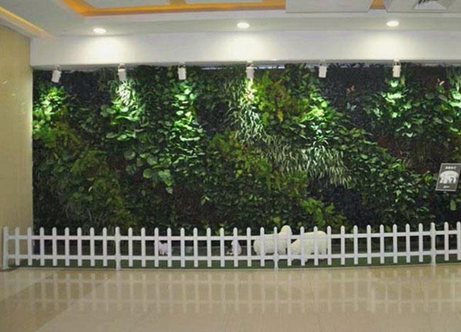 西田城墙体绿化